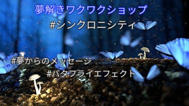 butterfly-2049567_640-1