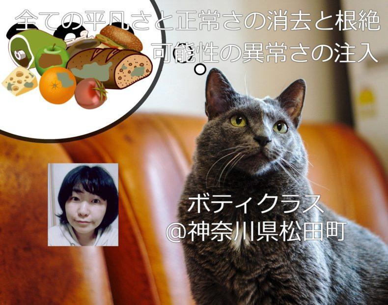 cat-5755816_1280-1
