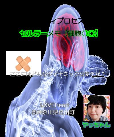 brain-3168269_1920-1-2