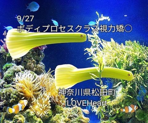 vegetable-694307_640-1-1